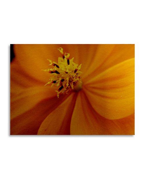 "Trademark Global Kurt Shaffer Orange Flower Floating Brushed Aluminum Art - 22"" x 25"""