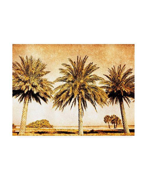 "Trademark Global Skip Nall Palms on Brown II Canvas Art - 15"" x 20"""