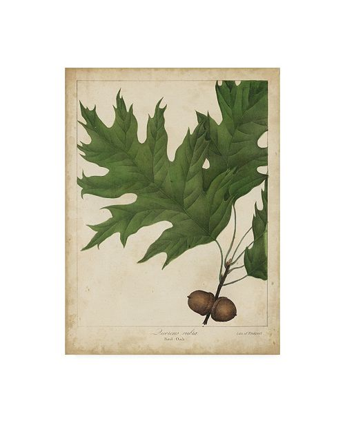 "Trademark Global John Torrey Oak Leaves and Acorns II Canvas Art - 20"" x 25"""