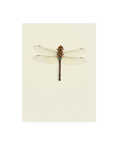 "Trademark Global Incado Dragonfly I Canvas Art - 27"" x 33.5"""