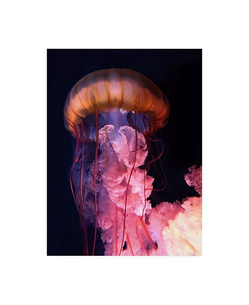 "Trademark Global PhotoINC Studio Gelly Canvas Art - 27"" x 33.5"""