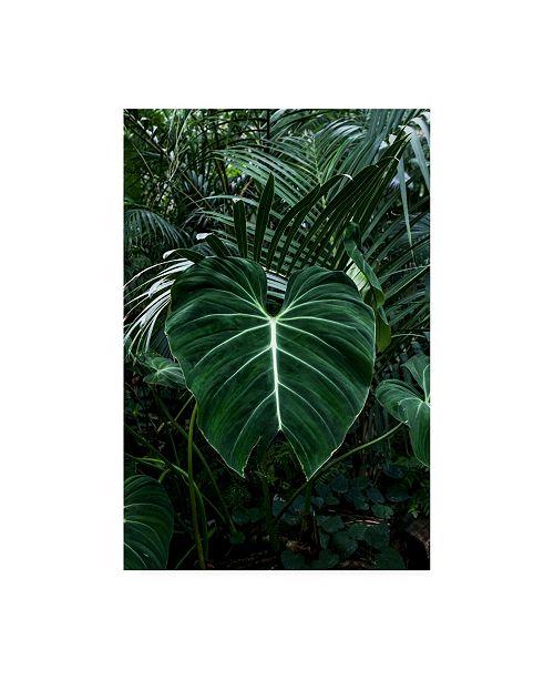 "Trademark Global PhotoINC Studio Tropical 3 Canvas Art - 15.5"" x 21"""