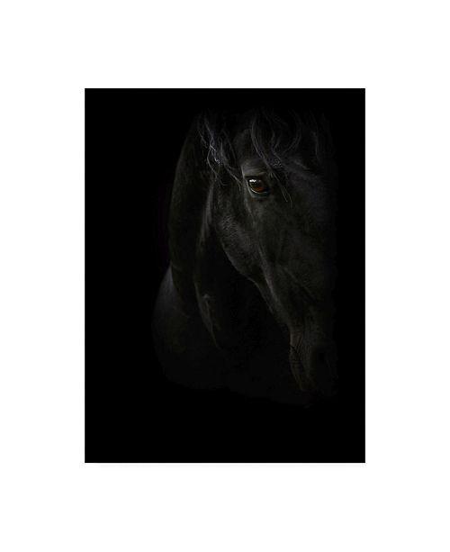 "Trademark Global PhotoINC Studio Black Pearl Canvas Art - 36.5"" x 48"""