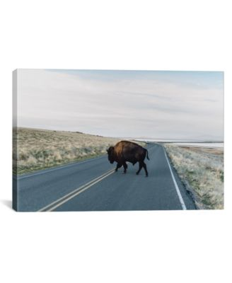 """Buffalo Bison by Chelsea Victoria Wrapped Canvas Print - 18"""" x 26"""""""