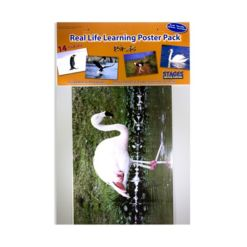 Stages Learning Materials Real Photo Birds Poster Set