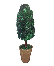 """Laura Ashley 25"""" Tall Preserved Natural Boxwood Artificial Faux Decor with Clay Pot"""
