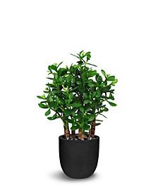 """Artificial Plants Jade Plant Crassula 32"""""""