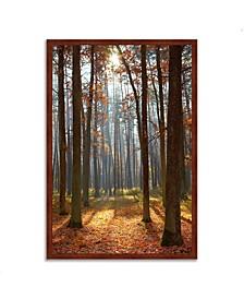 "Autumn Forest Framed Photograph Print, 26"" x 38"""