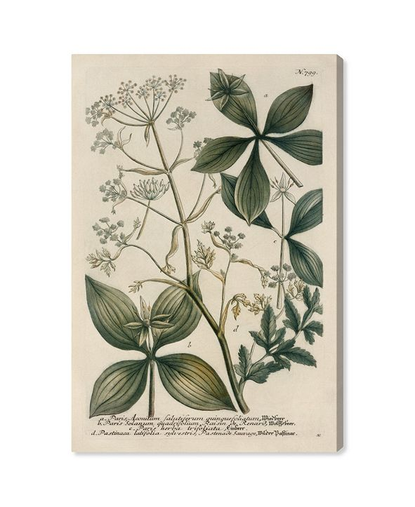 "Oliver Gal Herbs Canvas Art, 30"" x 45"""