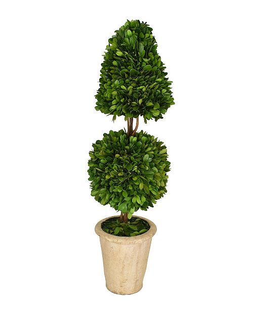 """Mills Floral 24"""" H Preserved Boxwood Mixed Topiary"""