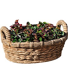 Provencal Basket Planter