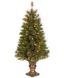 National Tree Company 4' Atlanta Spruce Entrance Tree with 100 Clear Lights