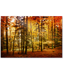 "Philippe Sainte-Laudy 'Brilliant Fall Color' 30"" x 47"" Canvas Wall Art"