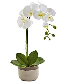 Artificial Phalaenopsis Orchid in Ceramic Pot