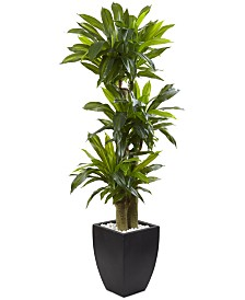 Nearly Natural 5.5' Corn Stalk Dracaena Artificial Plant in Black-Washed Planter