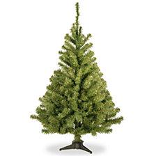 National Tree 3' Kincaid Spruce Tree