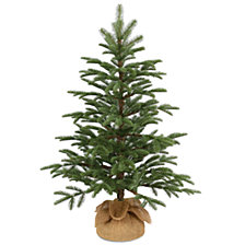 National Tree Company 3' Feel Real(R) PE Norwegian Seedling Small Trees in Burlap