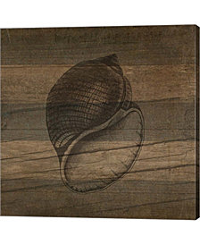 Rustic Conch By Tammy Apple Canvas Art