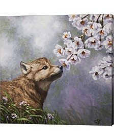 Baby Blossoms By Crista Forest Canvas Art