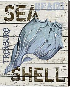 Blue Seashell by Karen J. Williams Canvas Art