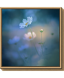 Amanti Art white shadow by Miyako Koumura Canvas Framed Art