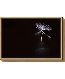 Amanti Art Ballet by Soide55 Canvas Framed Art