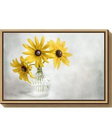 Amanti Art Rudbeckia by Mandy Disher Canvas Framed Art
