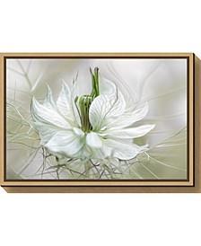 Nigella by Mandy Disher Canvas Framed Art