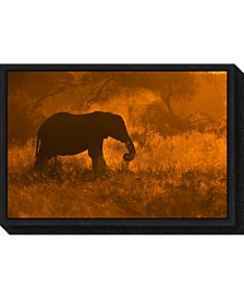 Golden Elephant in Savute by Mario Moreno Canvas Framed Art