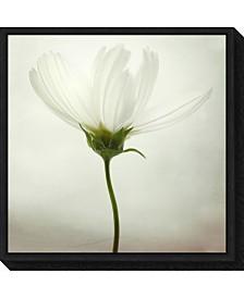 Amanti Art White cosmos by Lotte Gronkjaer Canvas Framed Art