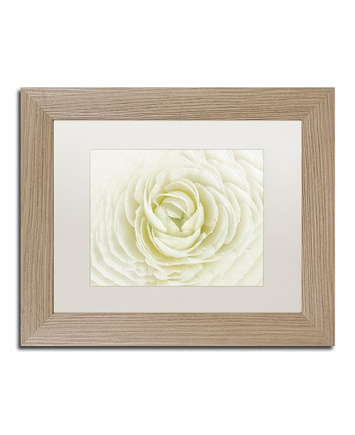 """Trademark Global Cora Niele 'White Persian Buttercup' Matted Framed Art, 11"""" x 14"""""""