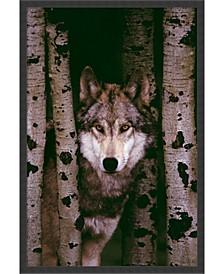 Gray Wolf- Framed Art Print