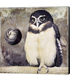 Moon Owl by Color Bakery Canvas Art