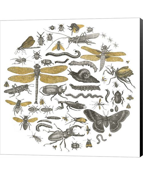Metaverse Insect Circle I by Wild Apple Portfolio Canvas Art