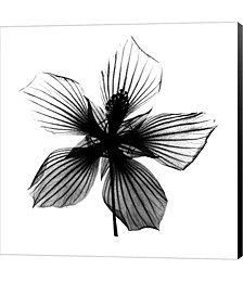 Texas Star X-Ray by Carla Kurt Canvas Art