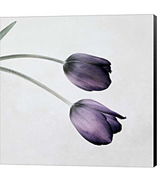 Tulip III by Symposium Design Canvas Art