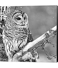 White Owl by PhotoINC Studio Canvas Art
