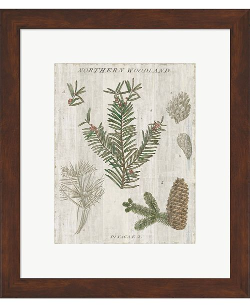 Metaverse Woodland Chart II by Sue Schlabach Framed Art