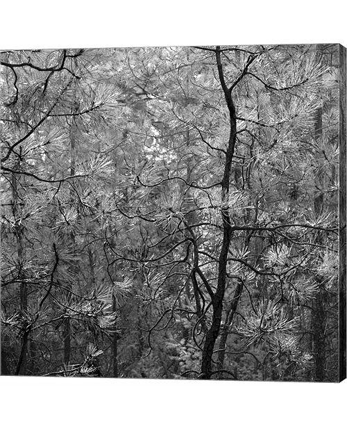Metaverse Pine Bramble by Erin Clark Canvas Art