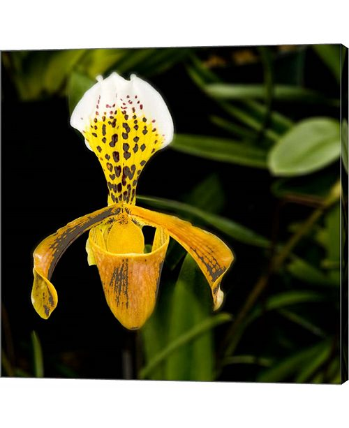 Metaverse Orange Orchid by Harold Silverman Canvas Art