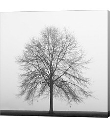 Winter Trio III by Nicholas Bell Photography Canvas Art