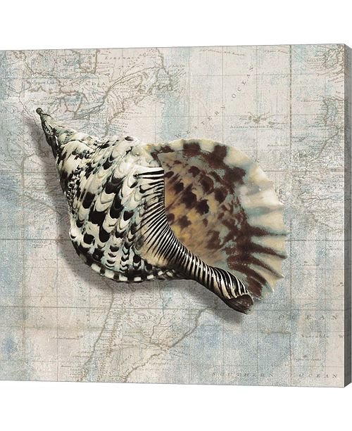 Metaverse Sea Shell by Ted Broome Canvas Art