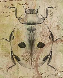 "Victorian Ladybug 24"" X 36"" Canvas Wall Art Print"