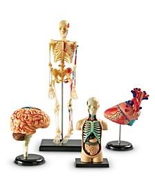 Anatomy Models Bundle