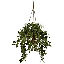 Mixed Stephanotis Hanging Basket