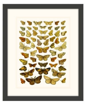 Butterfly Charts Iv Framed Giclee Wall Art - 15