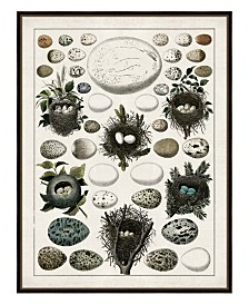 "Aerie I Framed Giclee Wall Art - 36"" x 47"" x 2"""