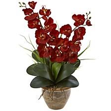 Double Phalaenopsis Harvest Silk Orchid Arrangement in Ceramic Vase