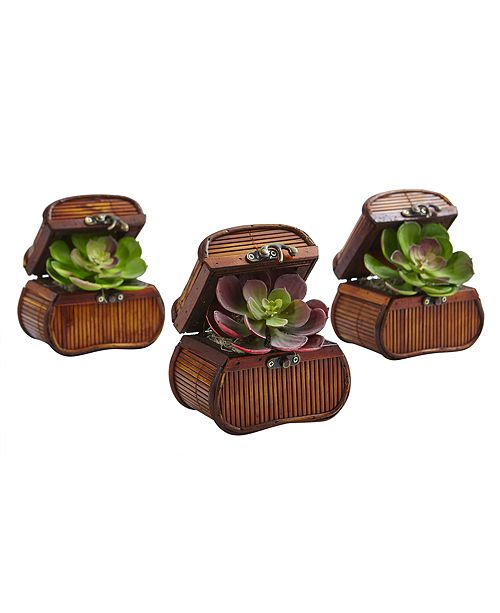 Nearly Natural Echeveria in Chest, Set of 3
