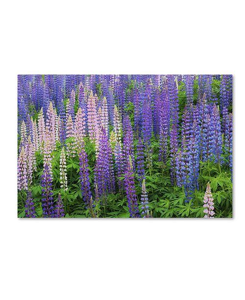 "Trademark Global Cora Niele 'Blue Pink Lupine Flower Field' Canvas Art - 47"" x 30"" x 2"""